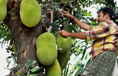 10 Health Benefits That Make The Jackfruit A Superfruit