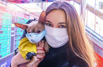COVID-19 and Animal Testing